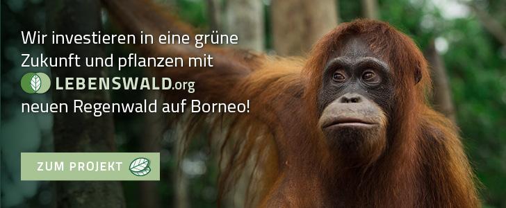 Banner Lebenswald.org